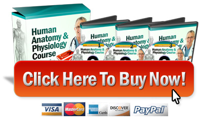 buy anatomy course