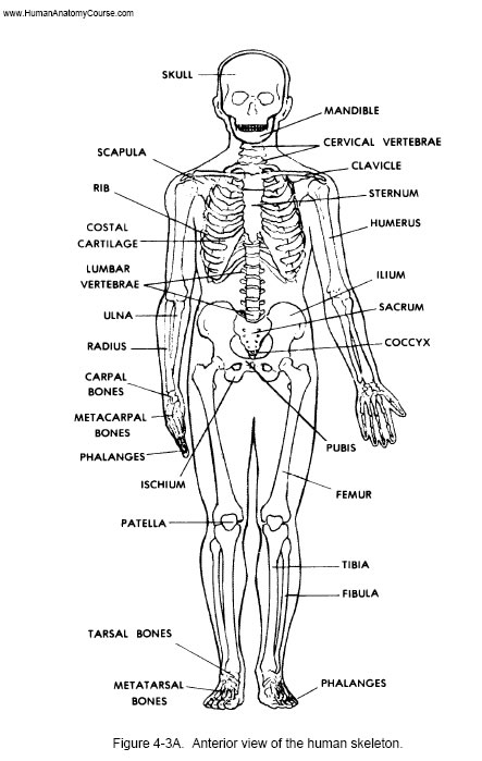 u00f8 the  1 human anatomy and physiology course  u00f8