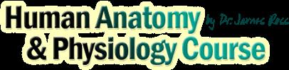 human anatomy logo